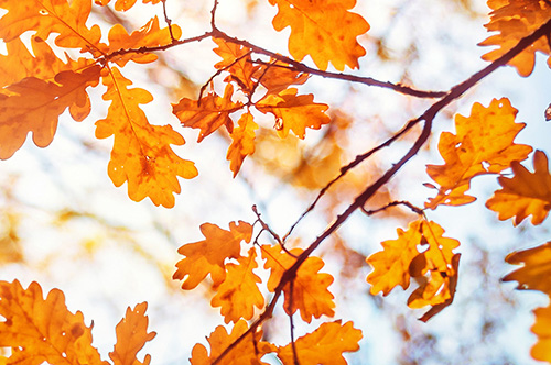 As the air turns crisper and the leaves change color, students are in shock about the arrival of the fall season.