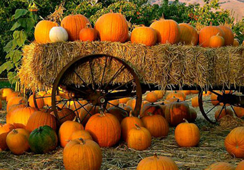 A pumpkin patch is just one of many places to go this month.