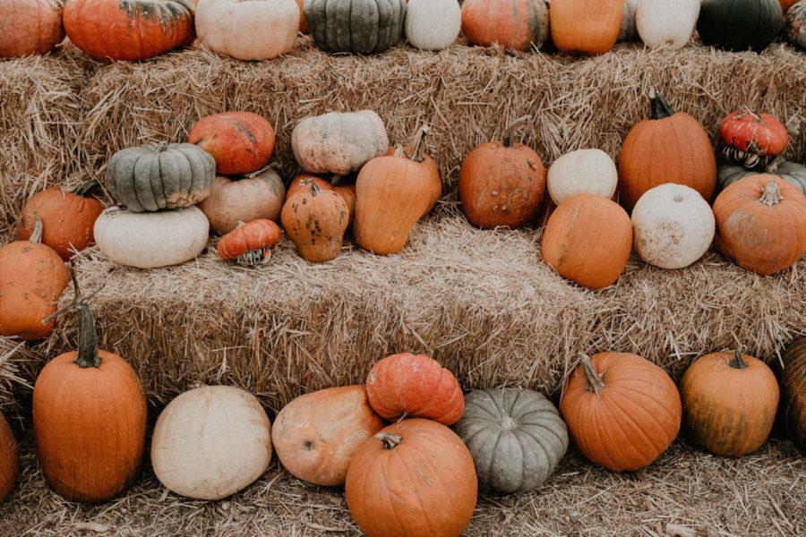 Pumpkins sit idly on hay stacks